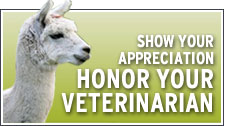 Honor Your Vet